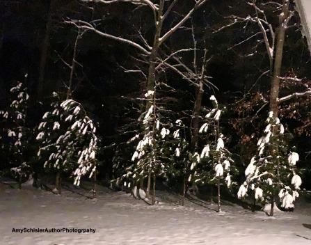 SnowyTrees2019.JPG